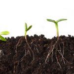 humic-fulvic-acid-for-plants